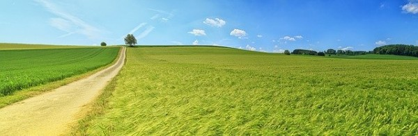 Field_image
