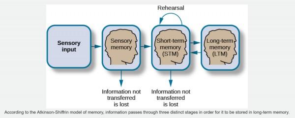 Sensory_memory
